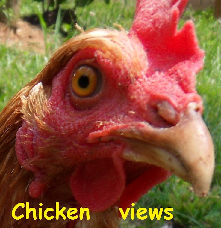 Just another chicken's views