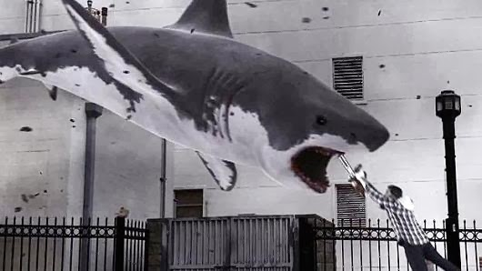 sharknado, movie, hollywood, blockbuster, flop, action, funny, hilarious, amusing, humor, silly, shark, shark week, voracious, shopping, fashion, fun