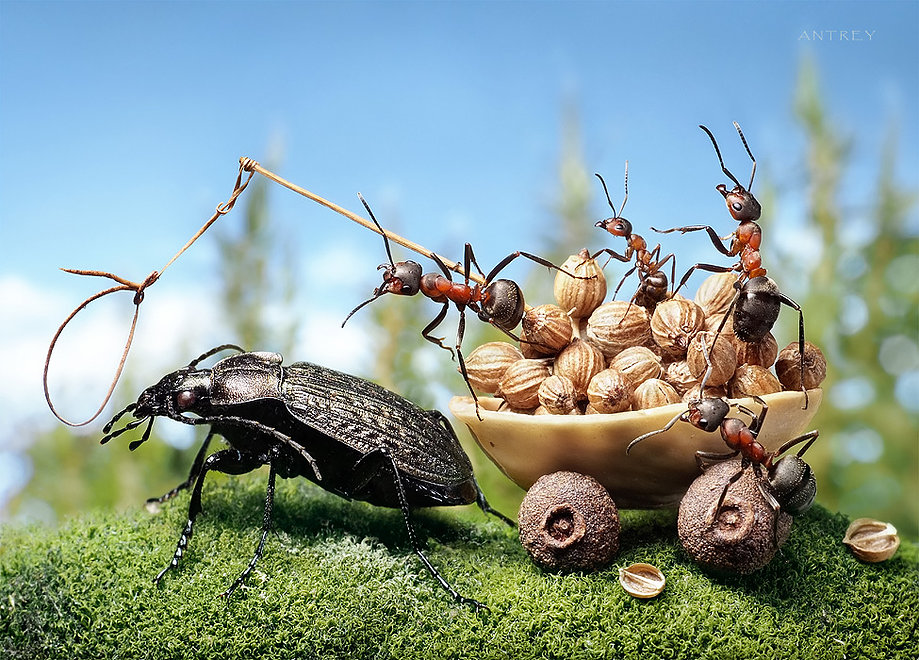 06-All-the-King-s-Horses-Andrey-Pavlov-Photographs-of-Ants-an-Affordable-Journey-to-a-Parallel-World