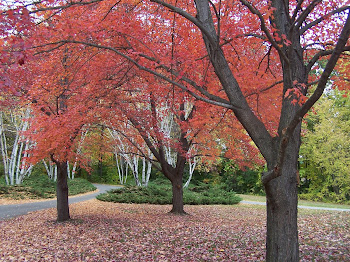 Autumn color in Mi.'09