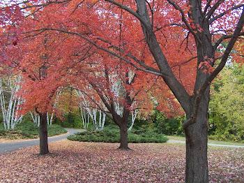Autumn color in Mi.'09