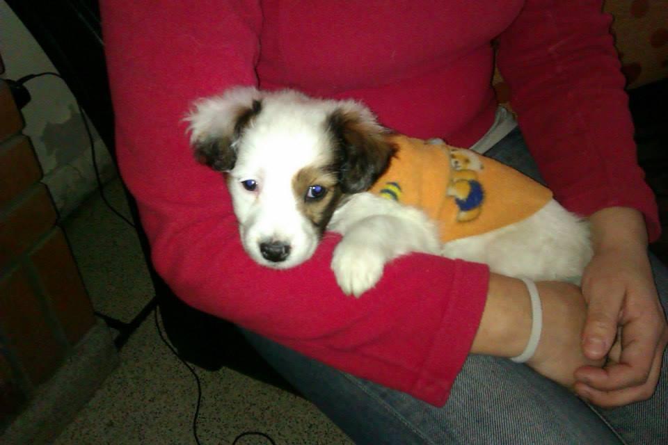 Blog de Perros Miniaturas: Perritos en Adopción Buenos Aires ...