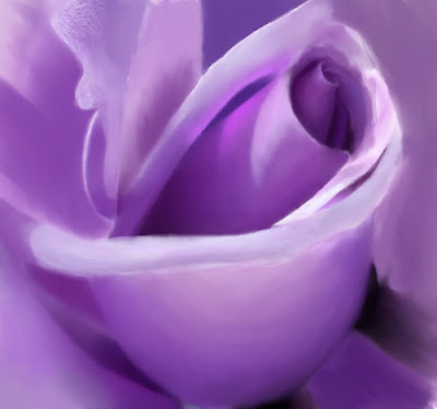 Lavender Rose Photos