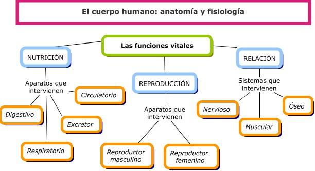 El mundo de la Anatomía