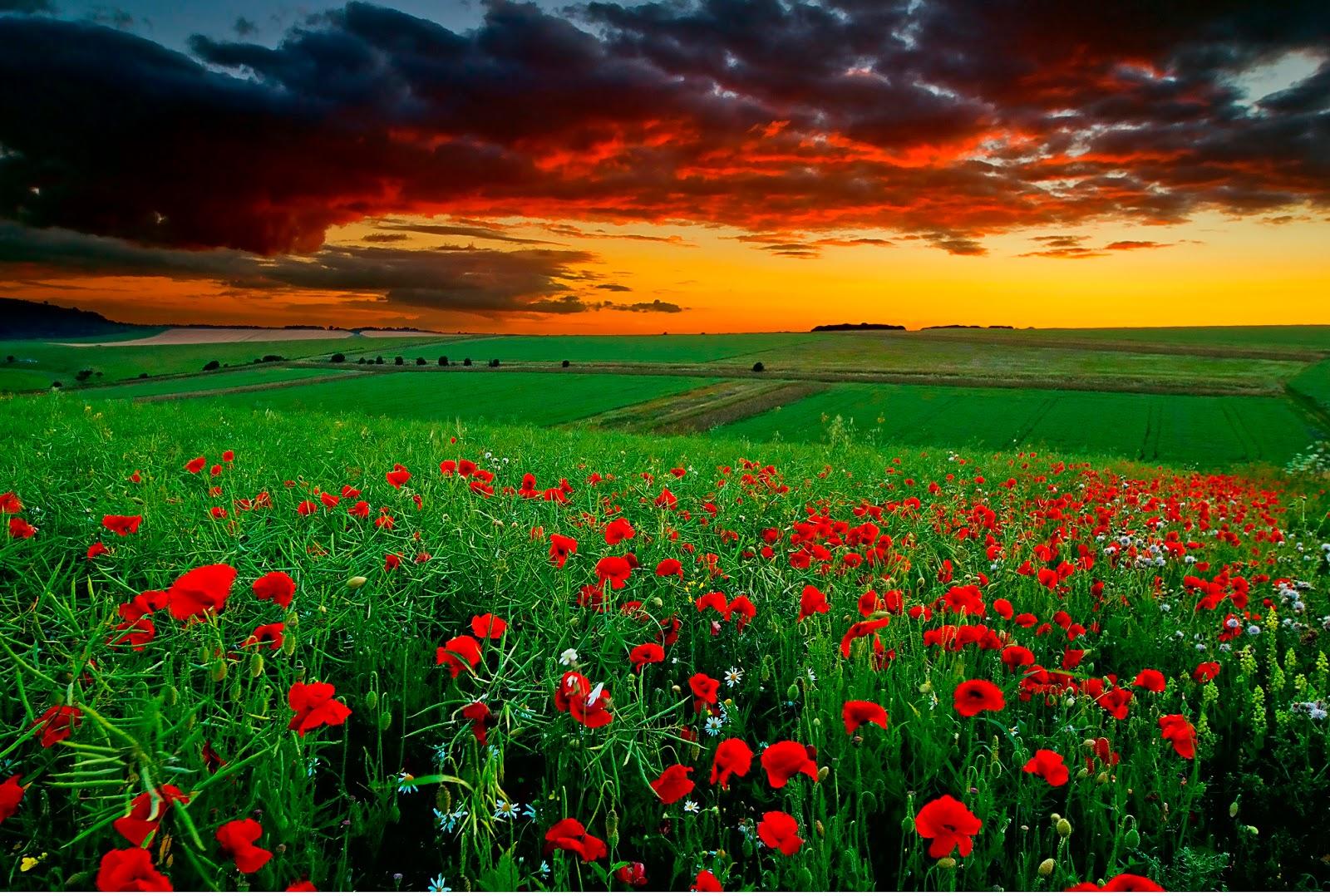 red landscape wallpapers for desktop - photo #17
