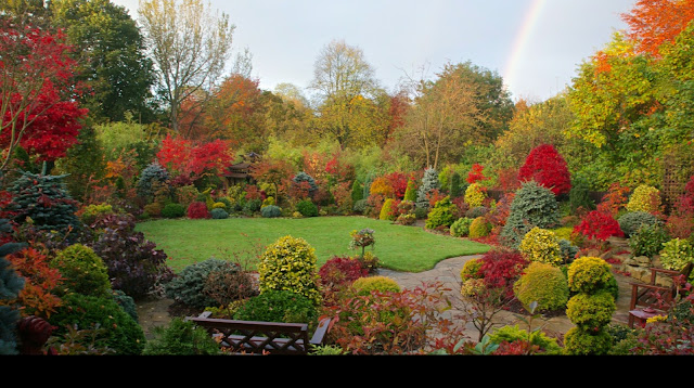 Garden acers in autumn  with rainbow.
