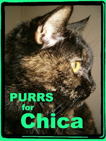 Purrs for Chica please