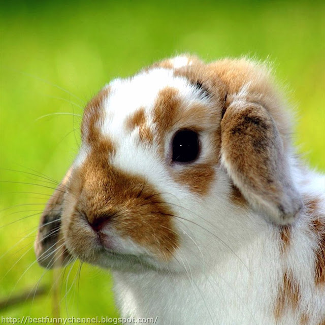 Beautiful bunny.