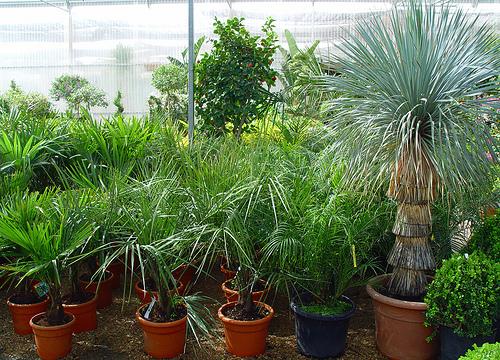 Jardiner a plantas yerbas viveros semillas maceteros for Viveros y plantas