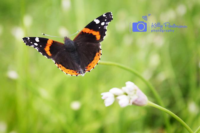 San Antonio Photographer, Butterfly, RAW Artist
