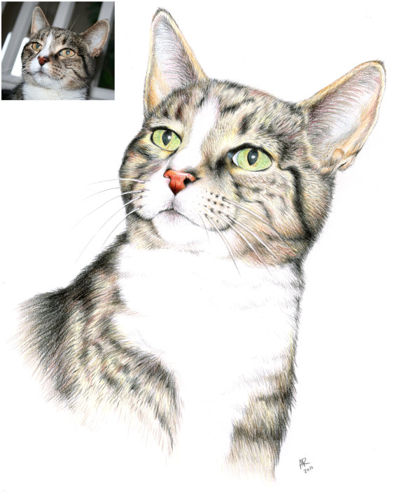 colored pencil drawing of our grey and black cat, with pink nose and green eyes, there is also a small inset of the original photo that the drawing was based on