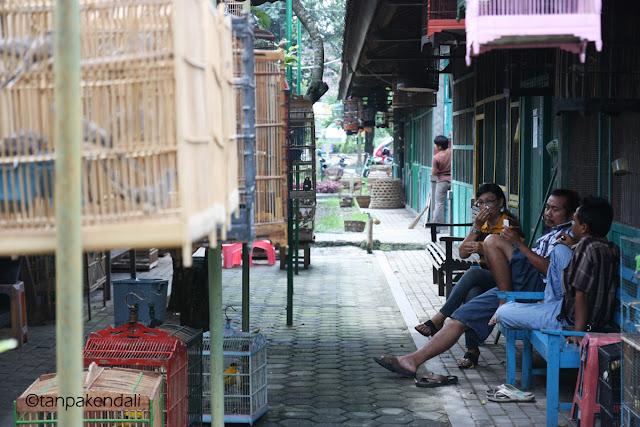 Pasar Satwa dan Tanaman Hias Yogyakarta, PASTY