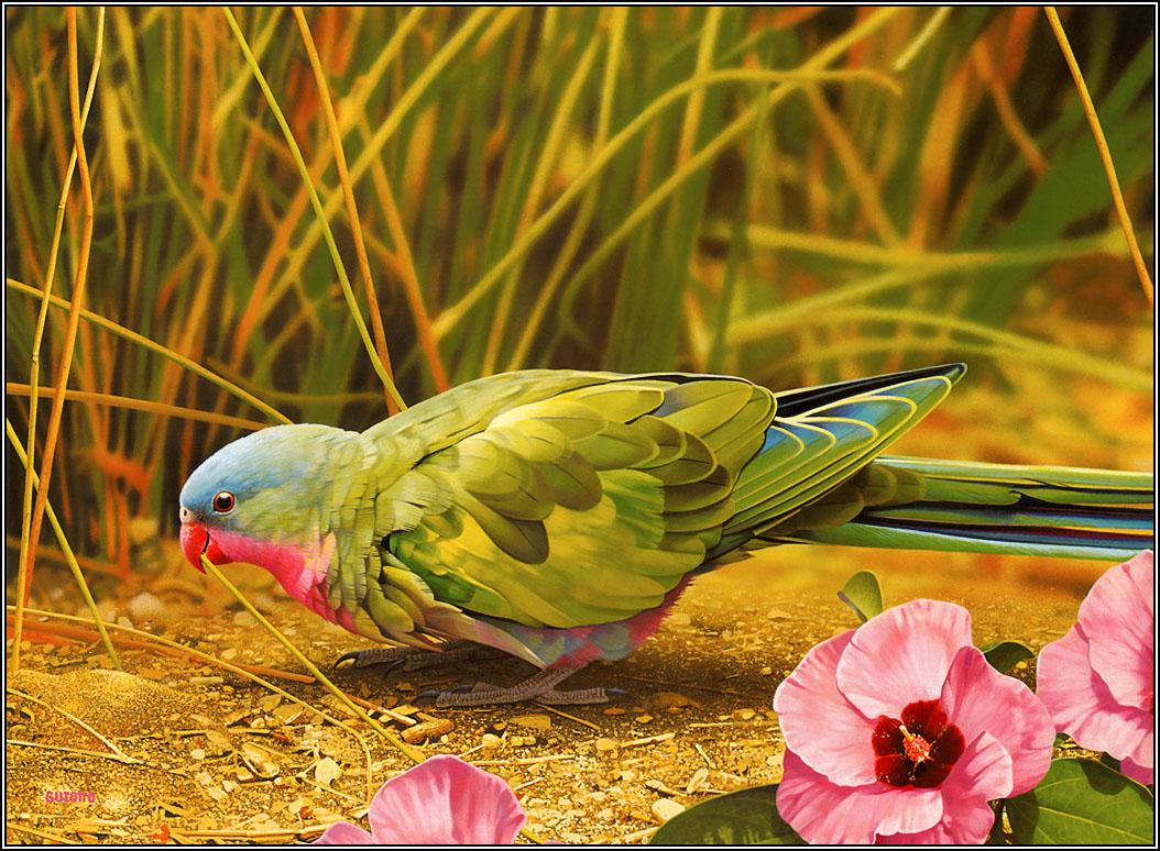 Bird Wallpaper Free Download