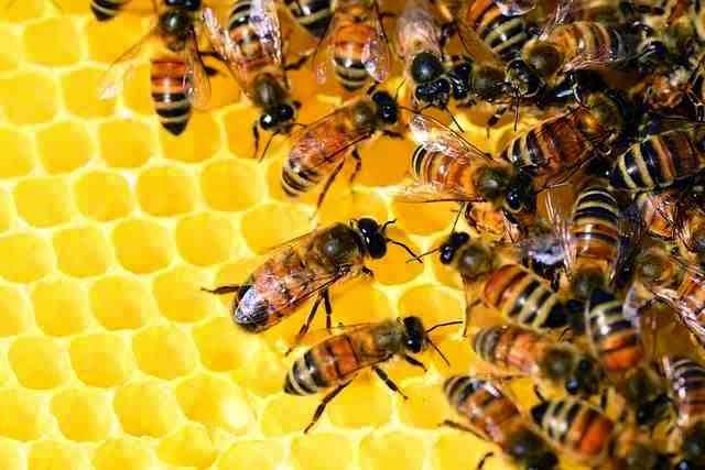 سبزه عید باذرت کامل كيفية تربية النحل في الجزائر pdf