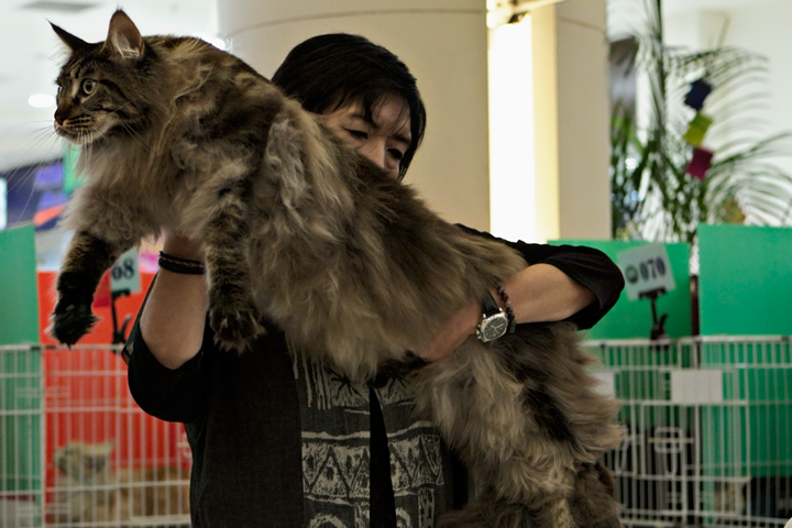 8 Jenis Baka Kucing Paling Mahal Di Dunia Kucing Paling