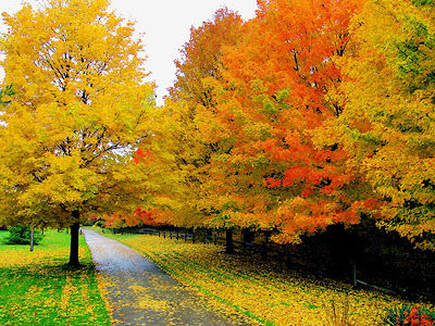 Cool and Nice Autumn Pictures
