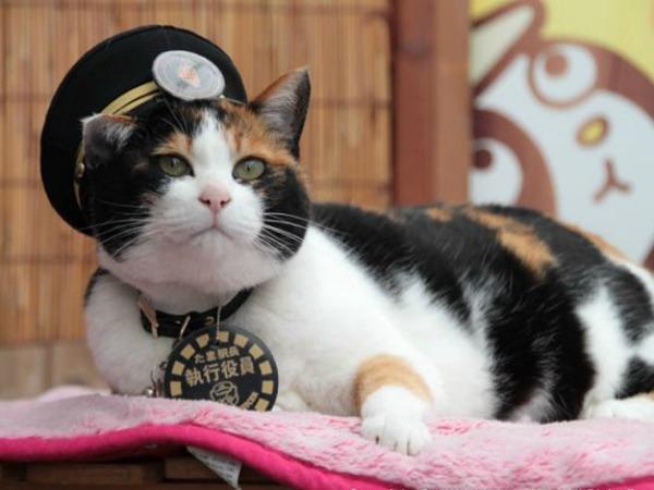 Muere el gato Tama, jefe de una estación de tren japonesa