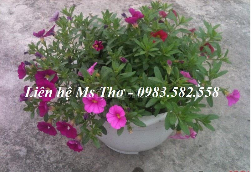 Chậu nhựa tròn trồng hoa