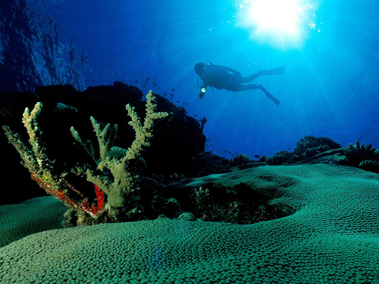 http://3.bp.blogspot.com/-AivFQCAQU3Q/TVqq0ydyHyI/AAAAAAAAAxQ/LUZaHCJR_MA/s1600/Underwater+Wallpaper+%252824%2529.jpg