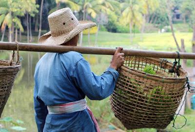 Thailand Farmer