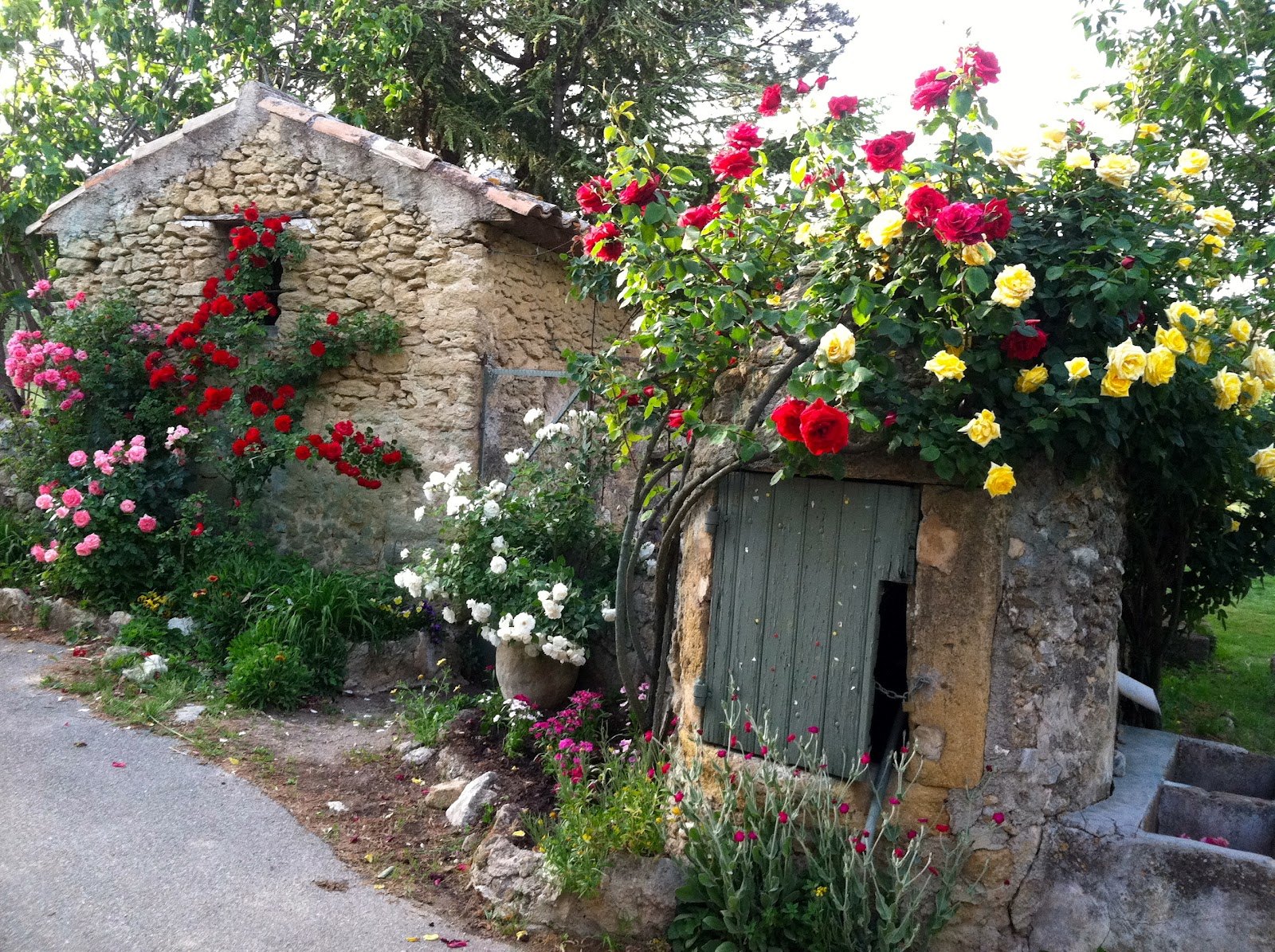 Perfectly Imperfect Display Of Roses Tucked Away On A Ruelle, Or Tiny  Street, In Lourmarin Good Ideas