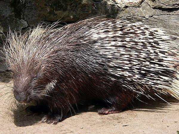 foto hewan gambar hewan