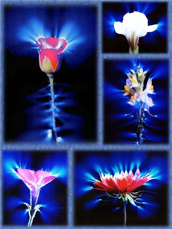 Фото Кирлиана цветы