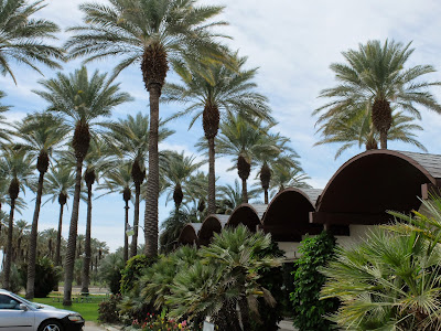 Entry to Oasis Date Gardens with Date Palms