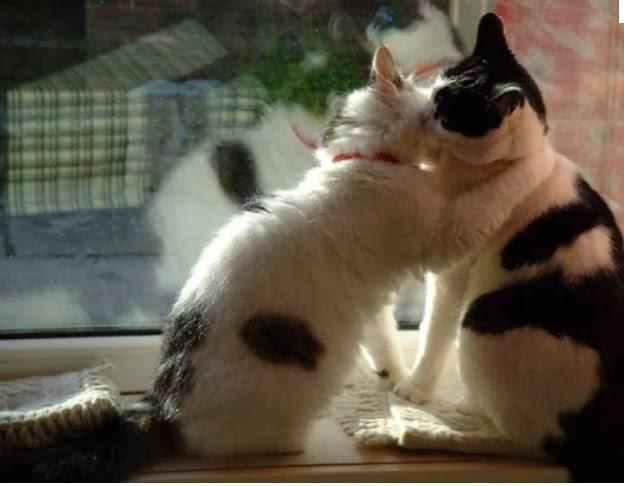 """Résultat de recherche d'images pour """"chats qui se bécotent"""""""