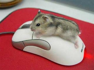 gambar tikus lucu
