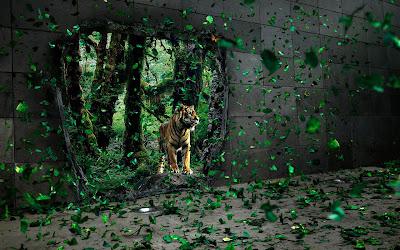 Tiger Images-06