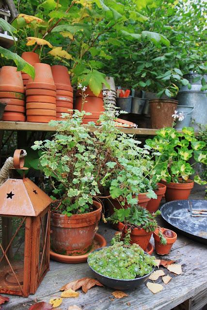 planteringsbord inspiration trädgård trädgårdsdesign blogg