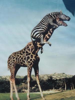 gambar binatang lucu