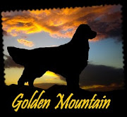 Blog Golden Mountain Canil
