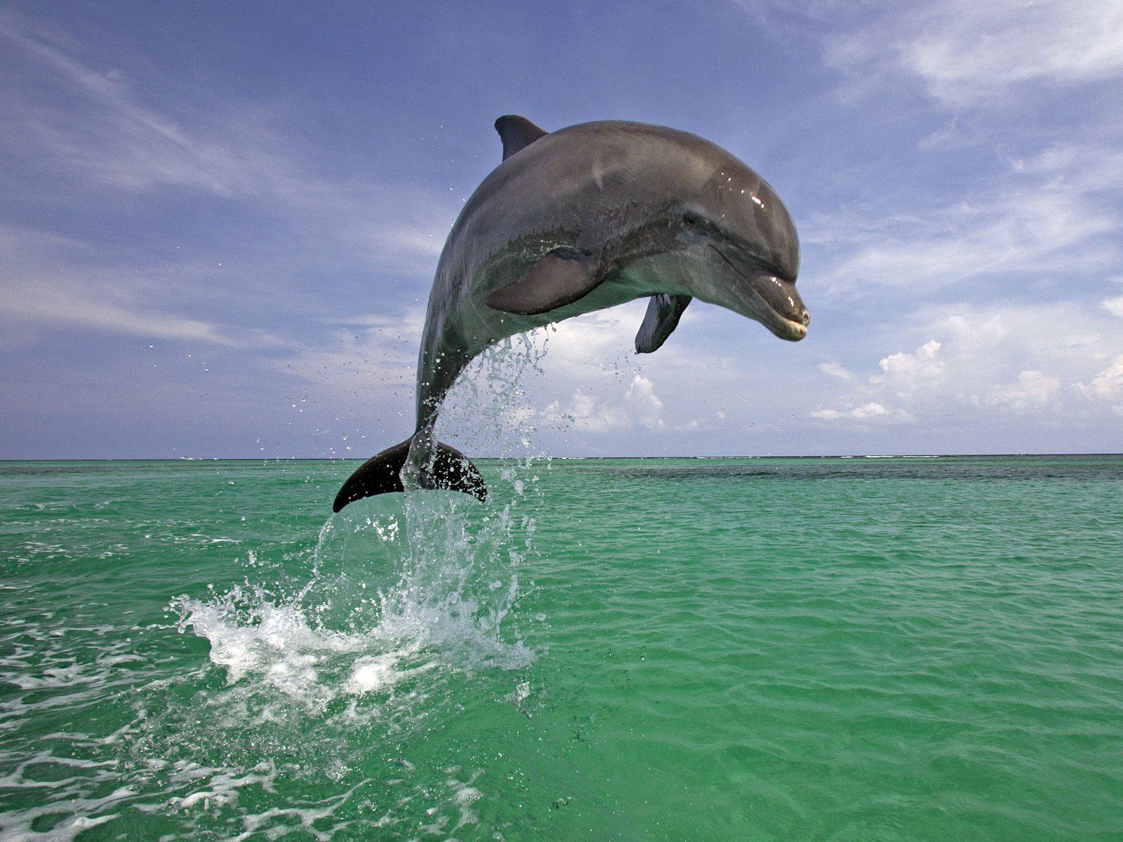 dolphin amazing fish interesting facts amp photos