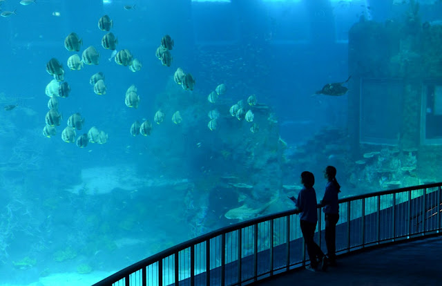 Photos The Opening Of The Largest Aquarium In The