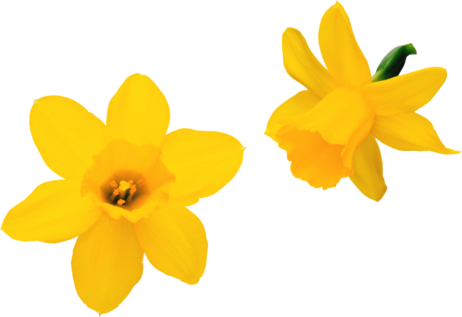 Fotos De Flores Gratis