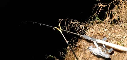 Ловля налима осенью ночью на фидер