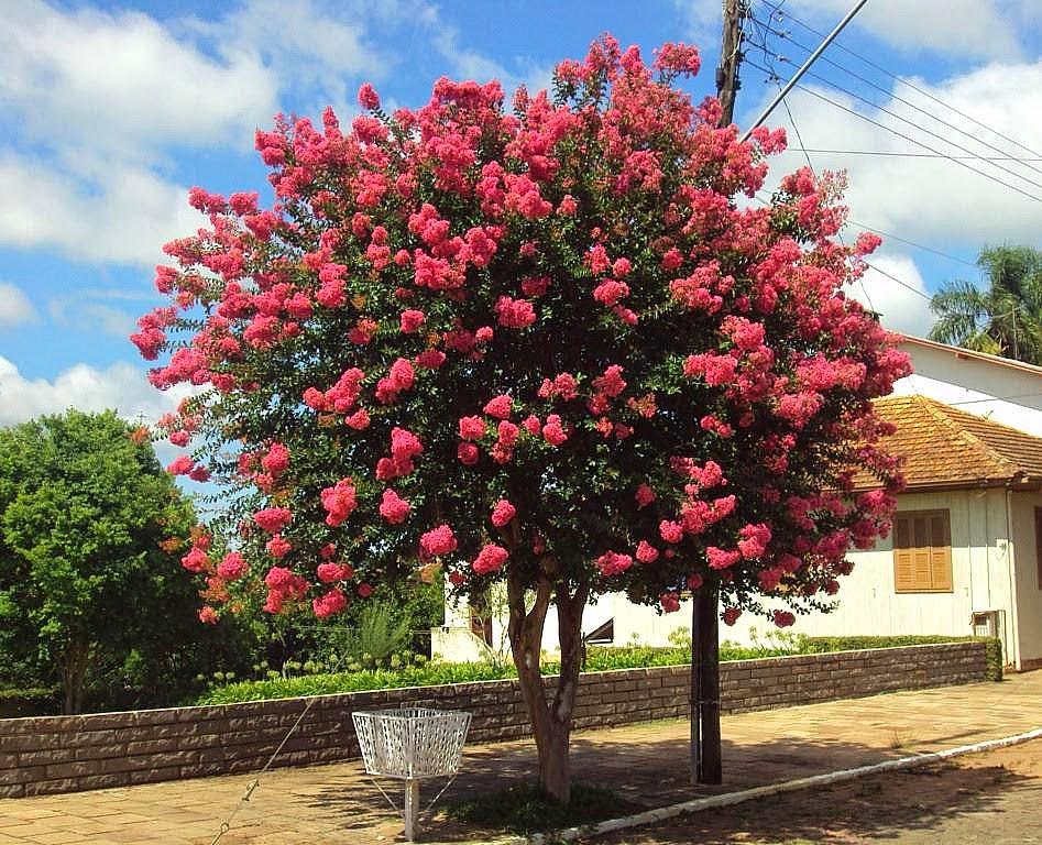 El jardinero plantas y flores reseda rosa for Arboles de jardin de hoja perenne