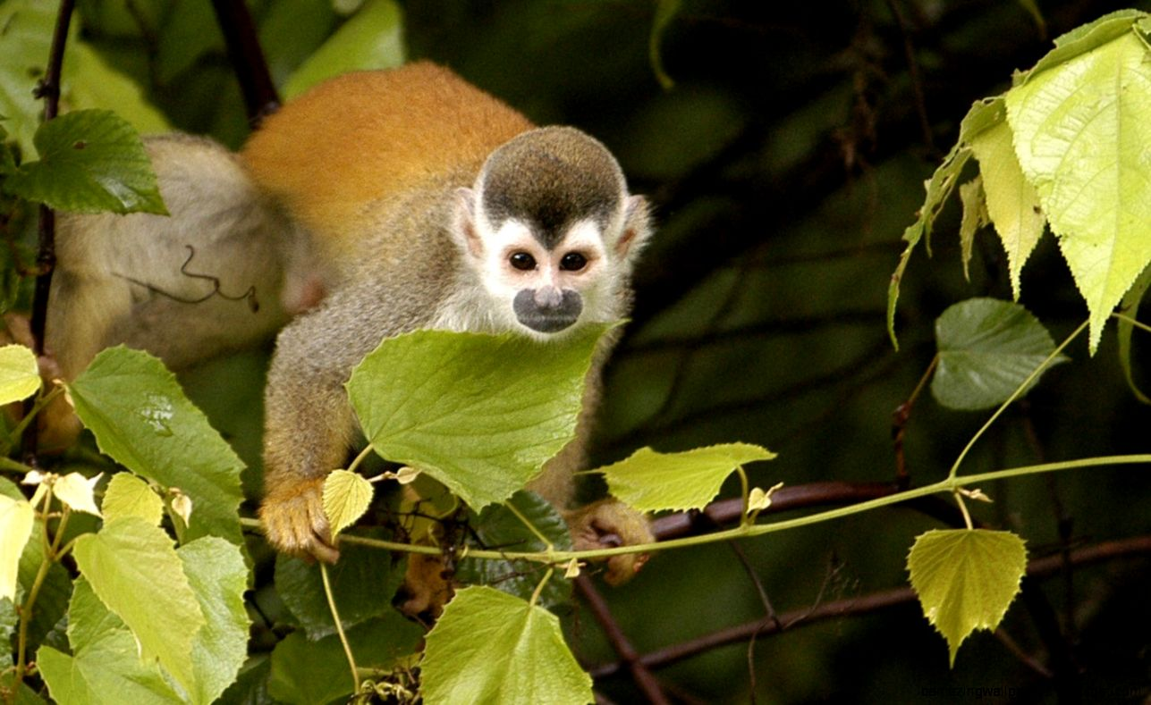 KSTR Costa Rica Non Profit Org Ecological NPO  Monkey Bridges
