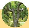 Bagian Tumbuhan Dan Fungsinya batang