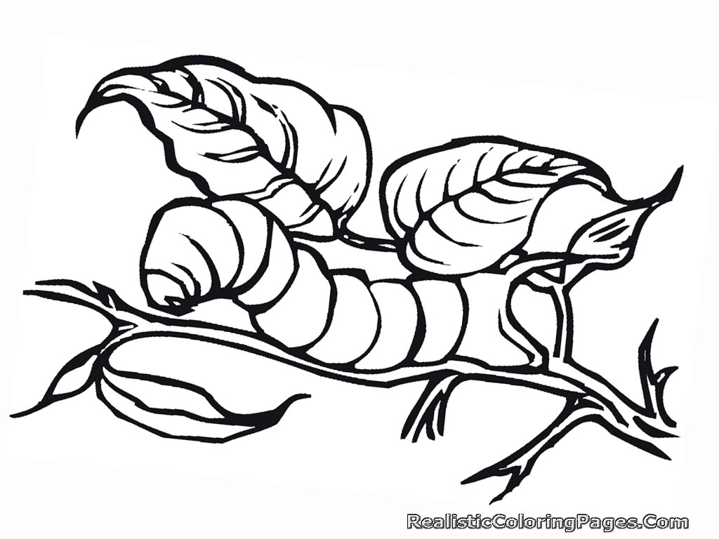Realistic Insect Coloring Pages