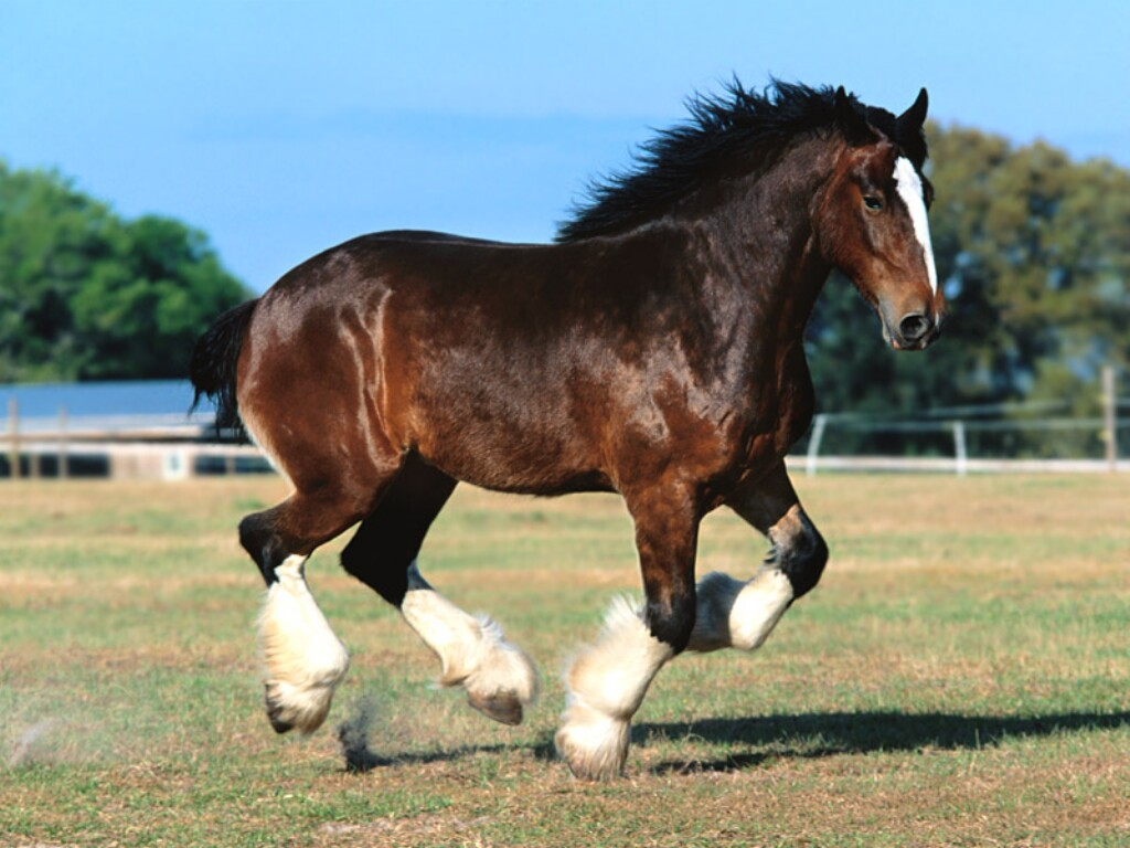 Beautiful horses in the world for Beautiful horses