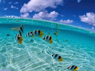 Ocean Wallpaper