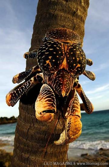 [Pict] Beberapa hal menakjubkan yang bisa ditemukan di Pasifik Selatan 6
