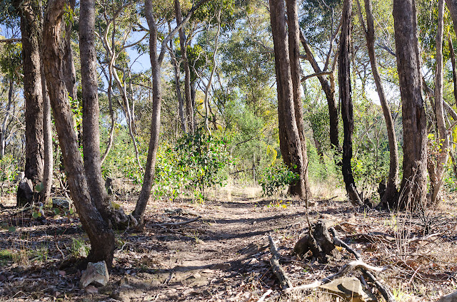 banksia track at steiglitz historic park