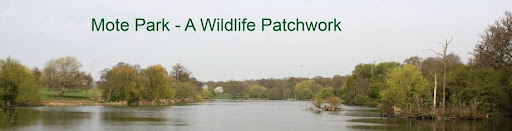 Mote Park - A Wildlife Patchwork
