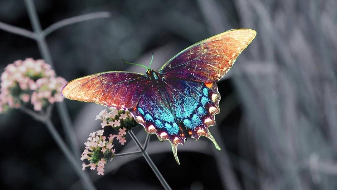 http://3.bp.blogspot.com/-AmVKSGNZG-A/TwVOOpA-EfI/AAAAAAAAGZ8/lIi7008wuyk/s1080/butterfly_on_flower_wallpaper.jpg