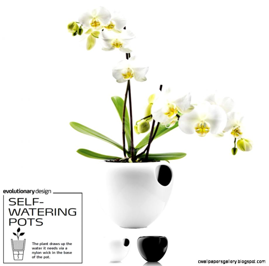 Vase EVA SOLO SELF WATERING ORCHID POT  RelaxTribe™