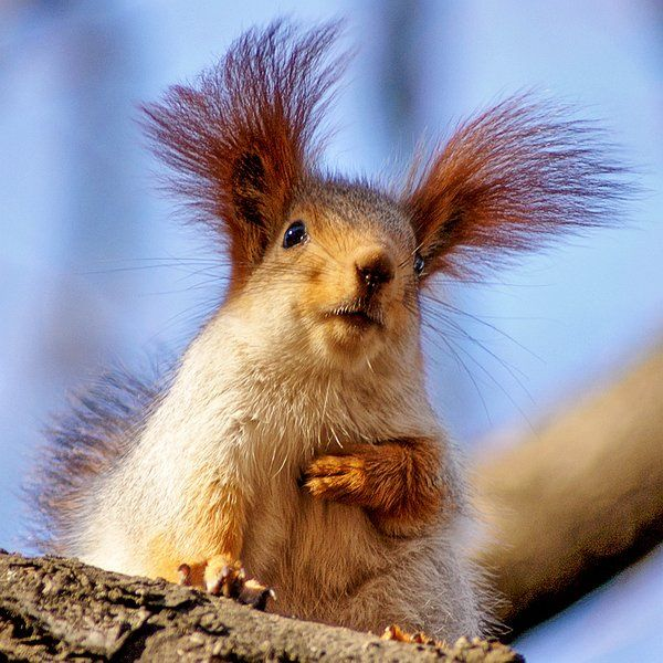 Funny squirrel pictures - photo#3